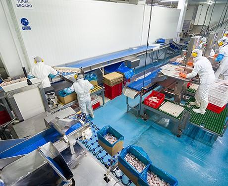 procesado y elaborados de pescado