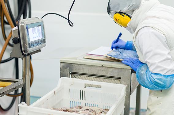 control de calidad de pescado